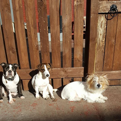dogs in the sunshine