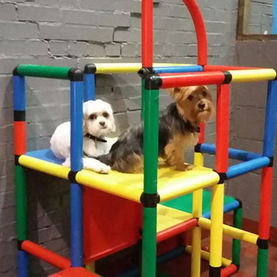 dogs on climbing frame